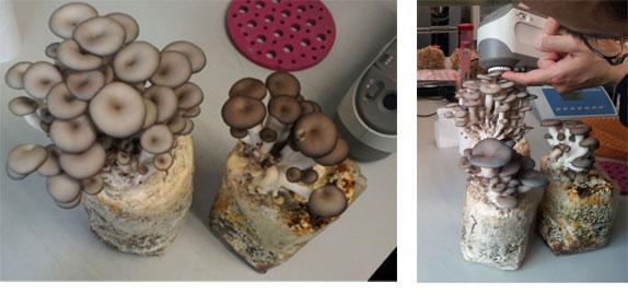 菌类遗传研究